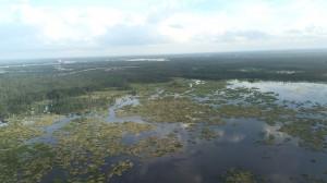 着陸直前に見えた風景。やはりルイジアナは湿地帯なんですね。